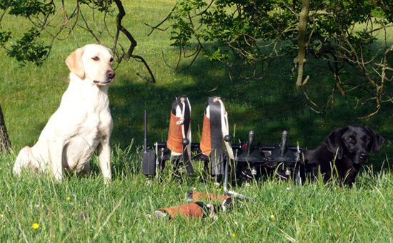 Westmacott Gundog Training in Northumberland